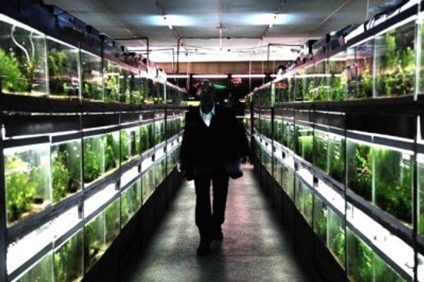 『冷たい熱帯魚』は1月29日(土)より公開