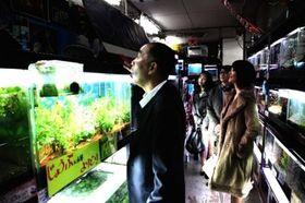 『冷たい熱帯魚』の公開を記念したサイト連動キャンペーン開始!