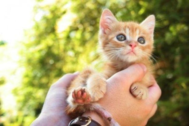 思わず、画面の中に入りたいと思ってしまうであろう癒し系ネコ映画が登場