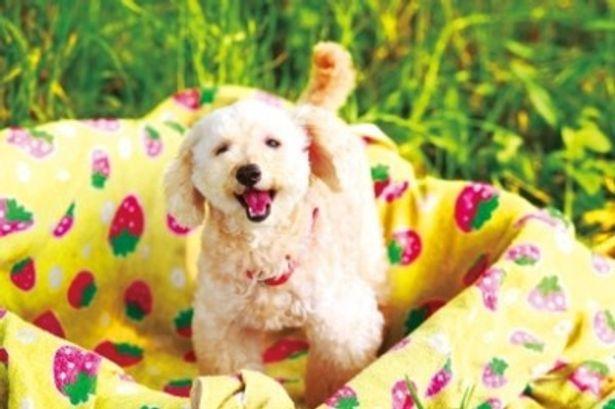 『犬とあなたの物語 いぬのえいが』は6つのストーリーから構成されるオムニバス