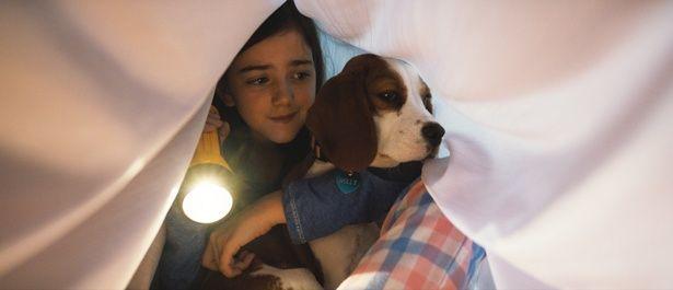 震えながらもCJの頼れる愛犬として振る舞うモリー