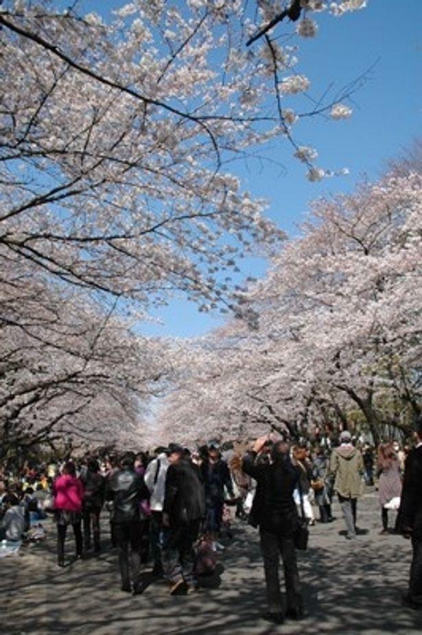 お花見シーズンを迎えた上野公園。例年より人手が少ないとはいえ、多くの人でにぎわっていた