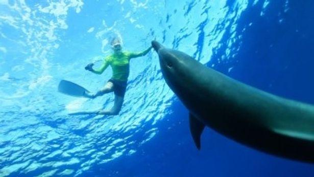 青木愛は小笠原諸島でマッコウクジラの会話の音を録音しに行く