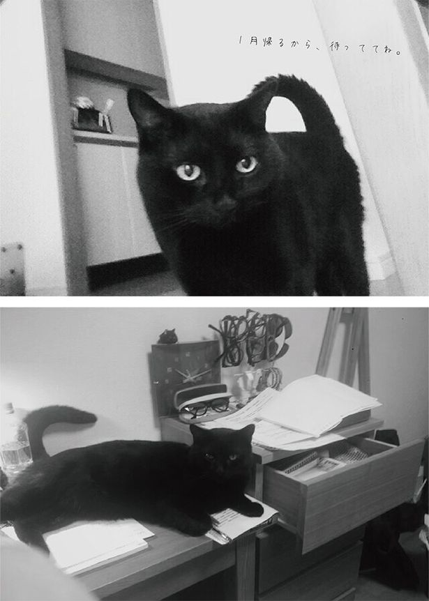 松本監督の実家の猫、ミイタ。