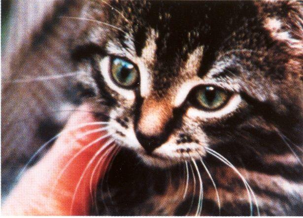 無邪気な子猫に癒される(『こねこ』)