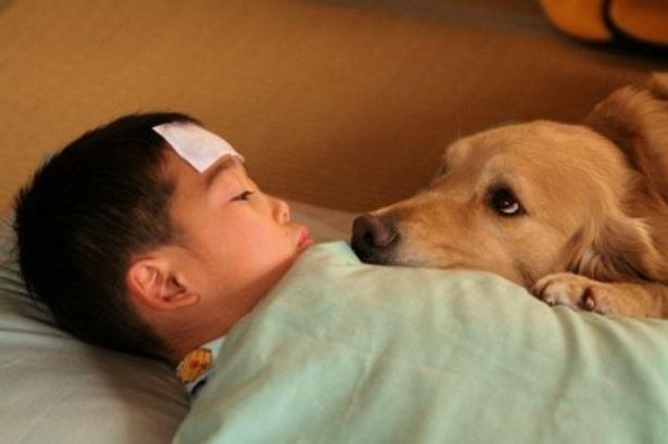 【写真をもっと見る】可愛すぎる!熱を出した芯を犬のロックが見守るシーン
