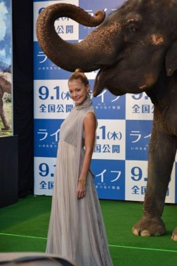 ゾウのランディ君といっしょに写真を撮る土屋アンナ