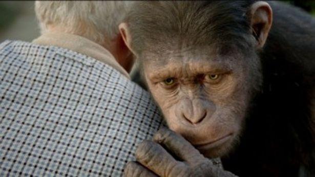 サッカー日本代表の北朝鮮戦、ウズベキスタン戦のハーフタイム中に『猿の惑星 創世記(ジェネシス)』の60秒特別CMが放送