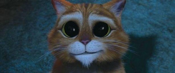 ウルウルな瞳で相手に同情を訴え、言うことを聞いてもらおうとするプス