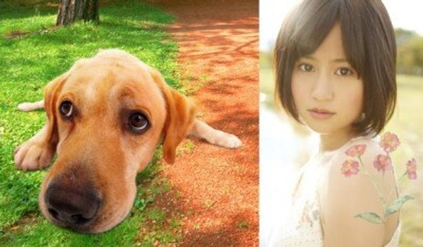 『LOVE まさお君が行く!』の主題歌「君は僕だ」を歌う前田敦子