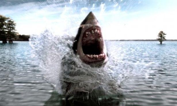 これが巨大アオザメの脅威だ!