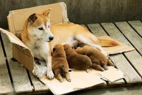 切なすぎ!子犬を守ろうと全身全霊で人間に立ち向かう母犬の姿に涙が止まらない