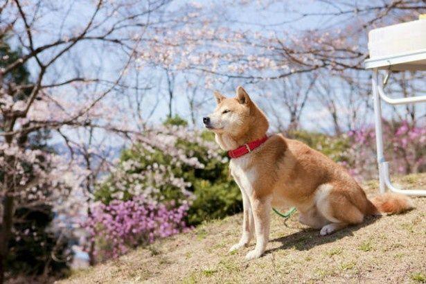 『桜、ふたたびの加奈子』は4月6日(土)より全国公開