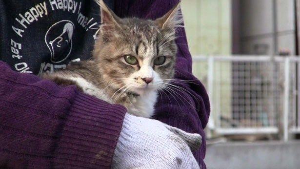 震災で取り残された犬や猫などのペットはいったいどうなっていたのか?