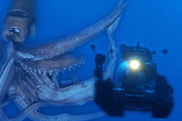 「NHKスペシャル」で深海に潜む巨大生物を追う!