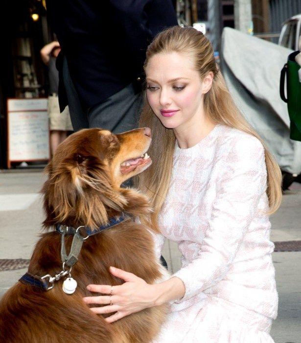アマンダ・サイフリッド、彼氏より犬と一緒にいる方が幸せ?