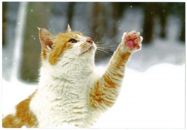 ネコたちのちょっとした仕草に思わず笑みがこぼれる