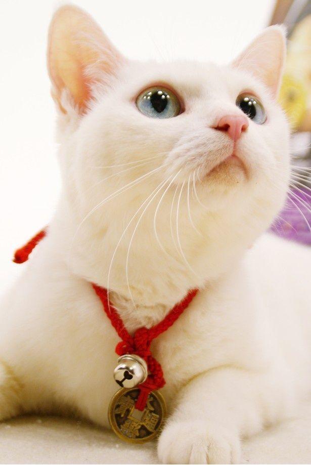 『猫侍』で玉之丞を演じたタレント猫のあなごの撮影に成功!