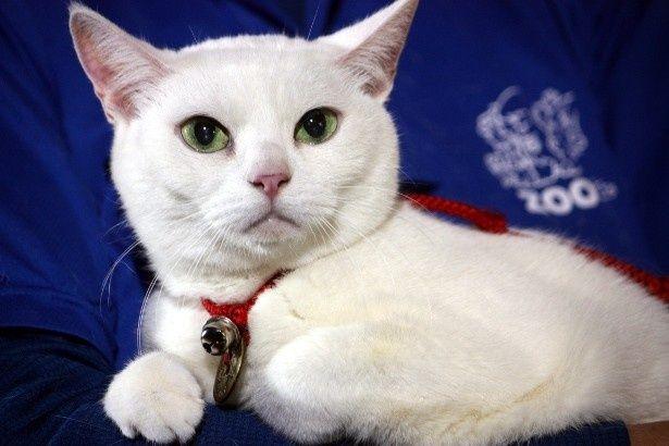 可愛さとツンデレぶりで大ブレイクした白猫・玉之丞役のあなご