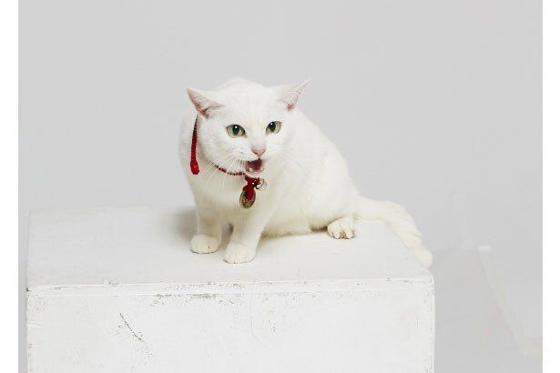 あなごの活躍(?)がぞんぶんに楽しめる『劇場版 猫侍』はDVDとブルーレイで7月18日(金)からレンタル開始、8月6日(水)に発売
