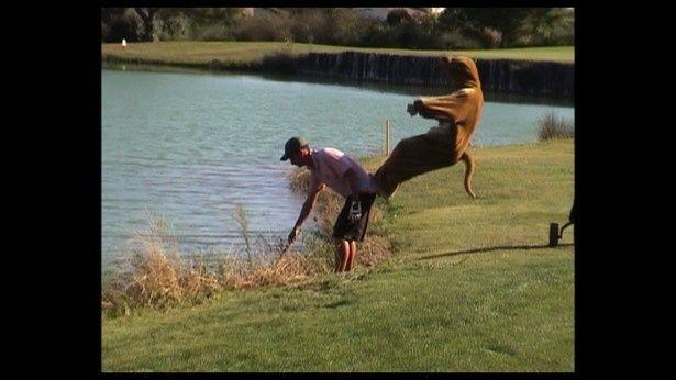 カンガルーの着ぐるみで人を池に蹴り落とす!