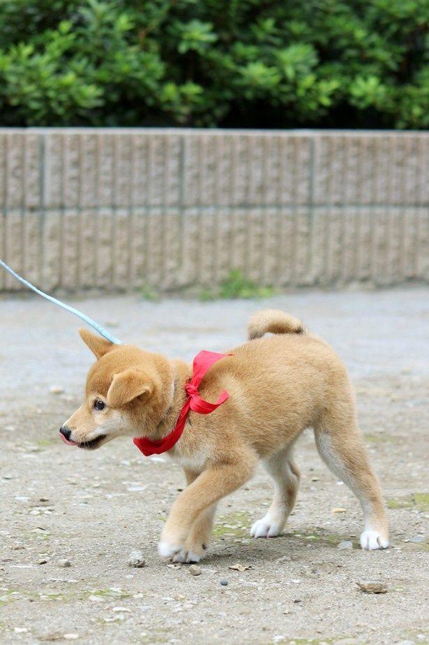 キョロキョロと周囲を見渡しながら、元気いっぱいに歩き回る