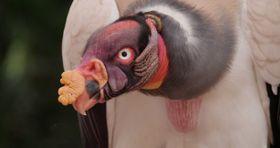 """""""キモカワ""""な動物や絶滅危惧種も登場!アマゾンに生息する超レアな生き物たちの写真を大公開"""