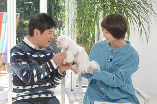 篠田麻里子(右)の愛犬・ムッシュと戯れる関根勤(左)