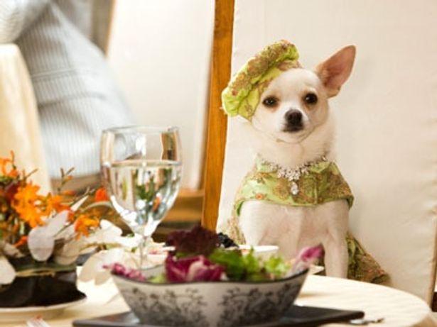 セレブ犬の冒険を描く『ビバリーヒルズ・チワワ』は5月1日(金)公開