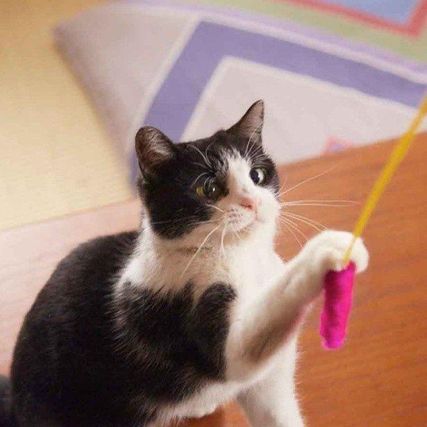 猫じゃらしに夢中で寄り目に(笑)