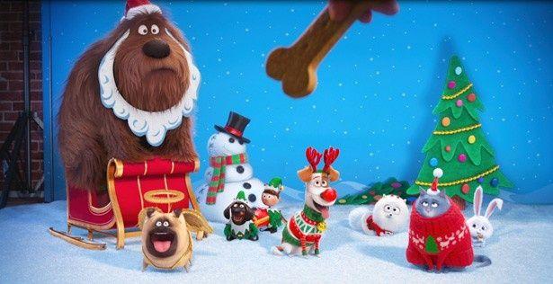 クリスマスの撮影をするペットたち