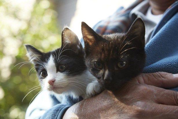 やんちゃな兄弟猫のチン(左)&クロ(右)
