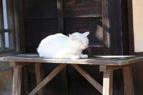 可愛すぎてズルい!話題の癒し猫の最新写真を入手