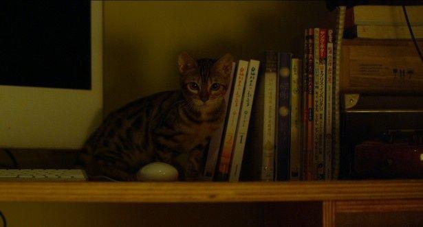 【写真を見る】猫あるある!?狭い隙間に入り込む子猫