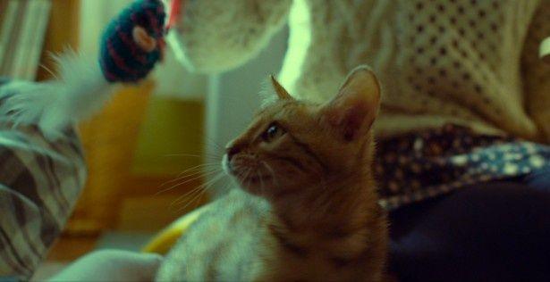 猫じゃらしで戯れるクルム