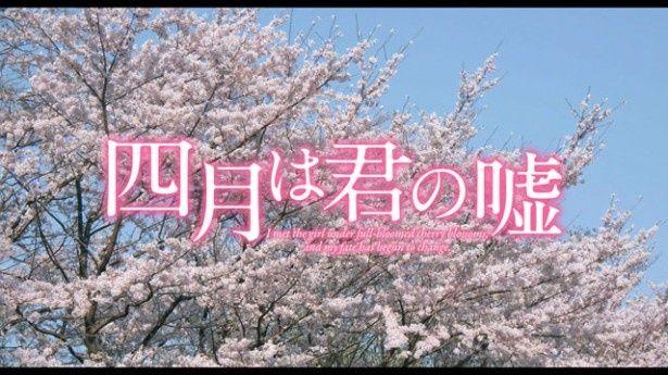 満開の桜がまぶしい特報映像のタイトルロゴ