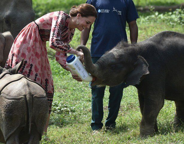 楽しそうにゾウの赤ちゃんにミルクを飲ませるキャサリン妃