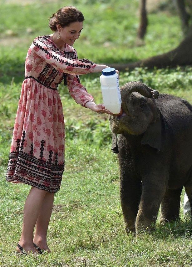 ゾウの赤ちゃんにミルクをあげるキャサリン妃