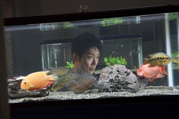 唯一の友達は熱帯魚という変わり者