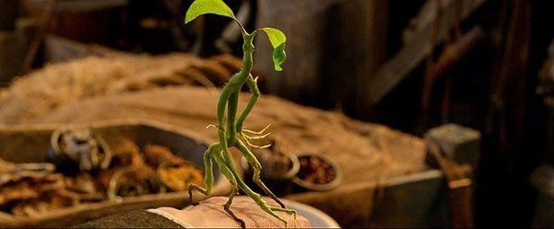 ニュートがピケットと呼ぶ、植物のような魔法動物のボウトラックル