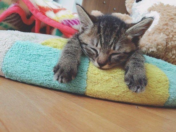 「ポケモンGO」で出合った猫