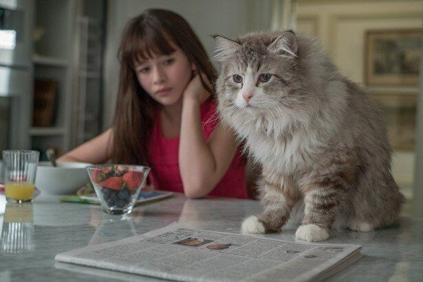 猫になってしまった傲慢社長の奮闘を描いた『メン・イン・キャット』