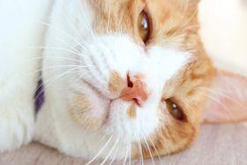 """猫好きの間で話題沸騰中!名実ともに""""大型新人""""なタレント猫に会ってきた!"""