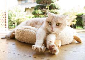 猫・猫・猫…!ひたすらかわいい猫まみれの写真を公開